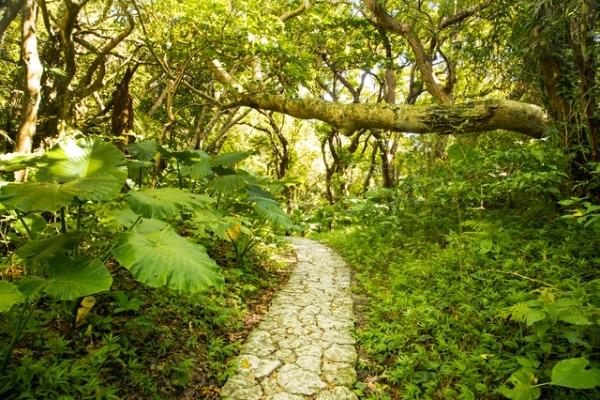 観光スポット記事「沖縄のパワースポットを巡る旅」