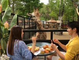 キリンと朝食