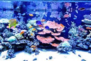おもしろ水族館「ウエルカムゾーン」リーフタンク水槽