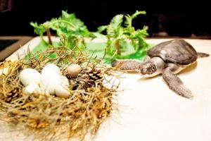赤ちゃん水族館「ウミガメの赤ちゃんゾーン」アオウミガメの赤ちゃん