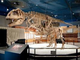 生命館2階 マプサウルス